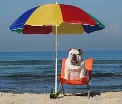 perros alquiler barcos ibiza