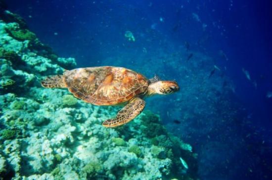 tortuga submarinismo
