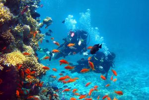 formentera submarinismo